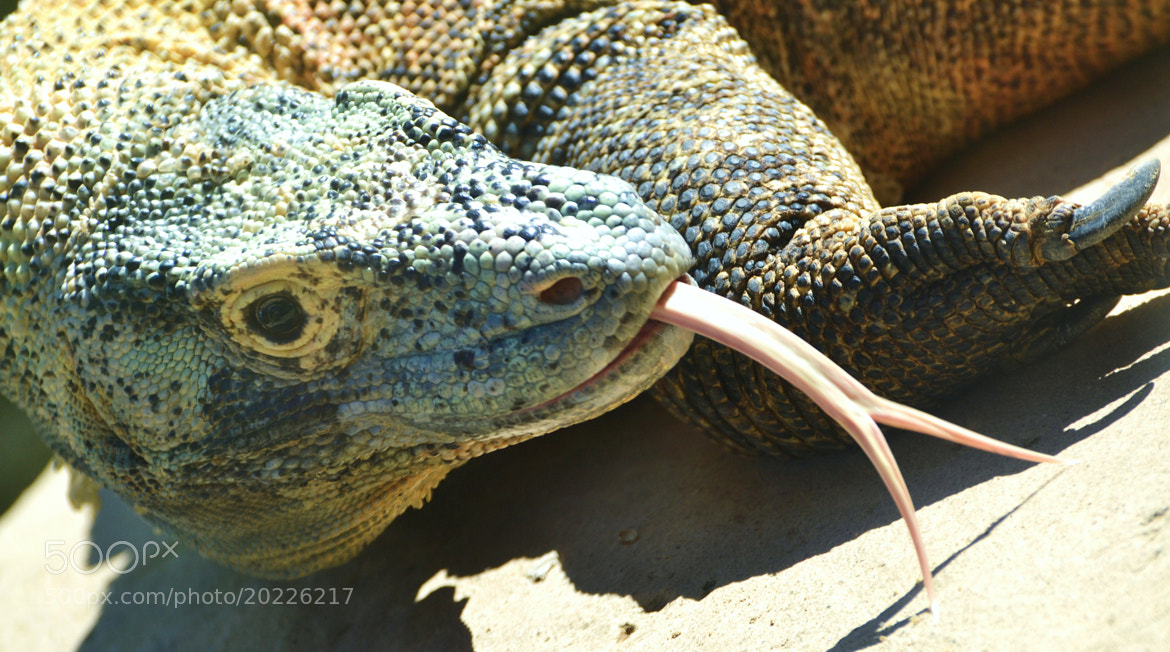 Photograph Here Be Dragons by Michael Fitzsimmons on 500px