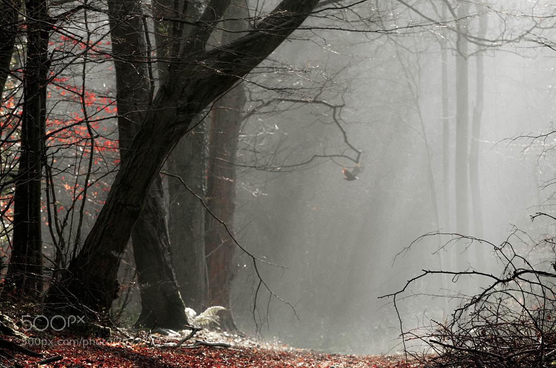 Photograph Bird's Wake-up by Pawel Niktos on 500px