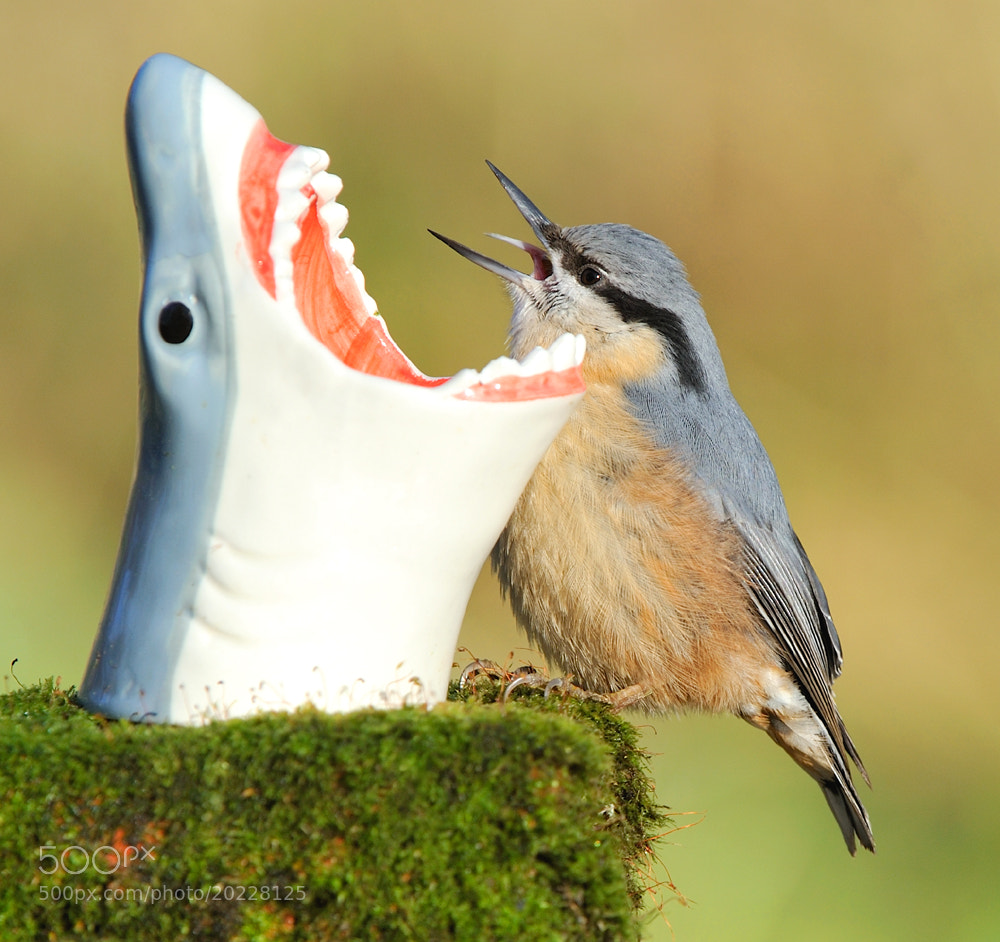 Photograph Open wide - sing along by Kevin  Keatley on 500px