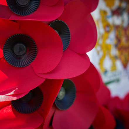 Remembrance, Sony DSLR-A330, Sony DT 50mm F1.8 SAM (SAL50F18)