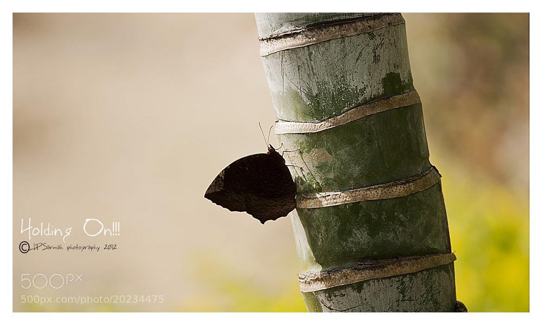 Photograph Holding On by Jyoti Prakash Sarmah on 500px
