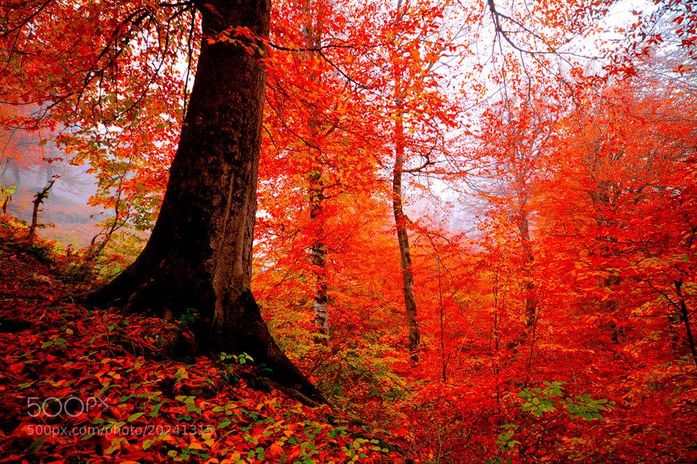 Photograph Autumn 7! by Asghar Mohammadi Nasrabadi on 500px