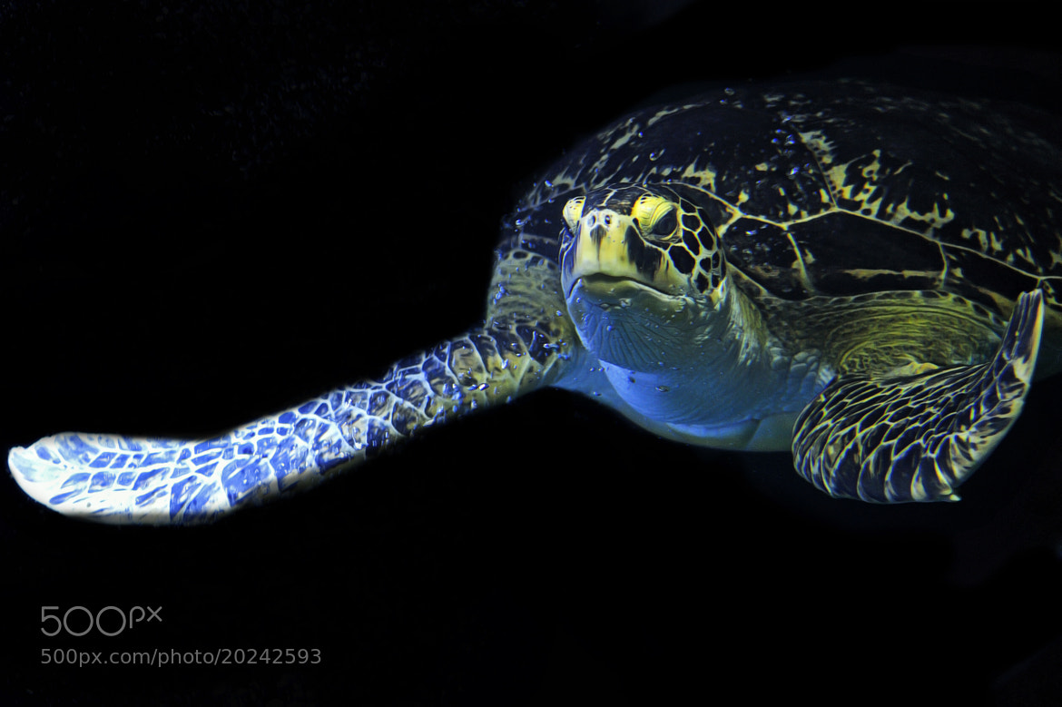 Photograph Sea Turtle at Night by Josef Gelernter on 500px