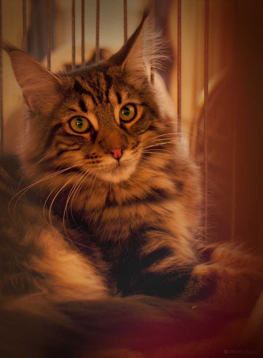 Photograph Catz by Oriol Colls on 500px