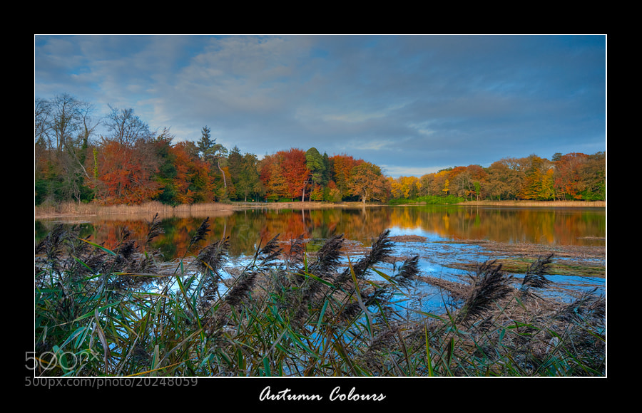 Photograph Autumn Colors by Rodrigo Cunha on 500px