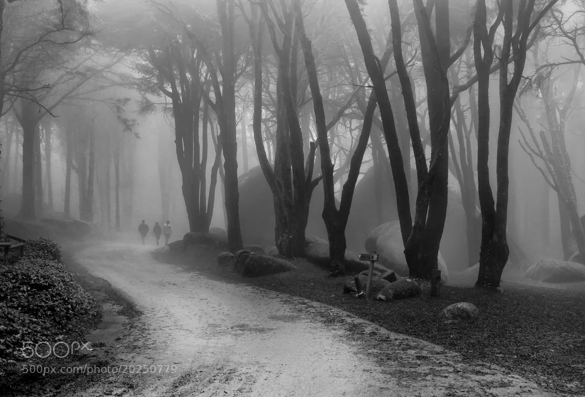 Photograph 3 Scouts down the road by Paulo Pereira on 500px