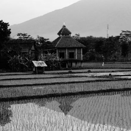 Reflections in a rice, Sony ILCE-6000