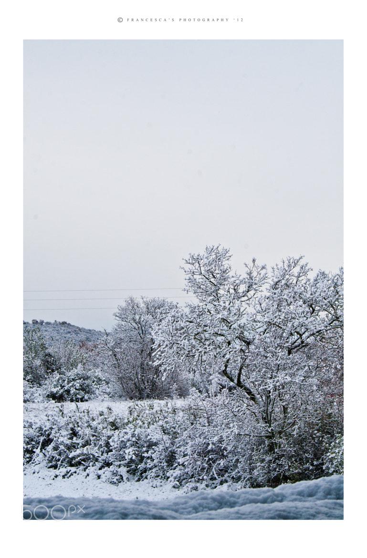 Photograph Frozen by Francesca Delbianco on 500px