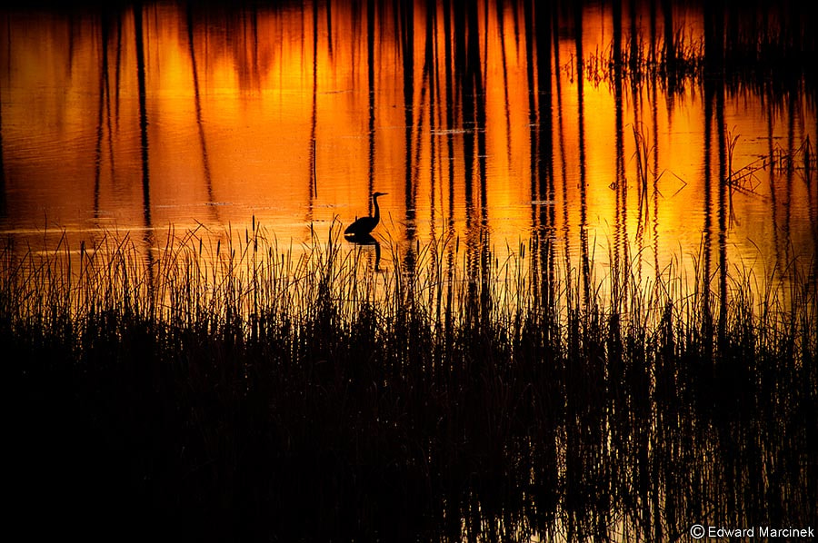 Photograph Fisher King by Edward Marcinek on 500px