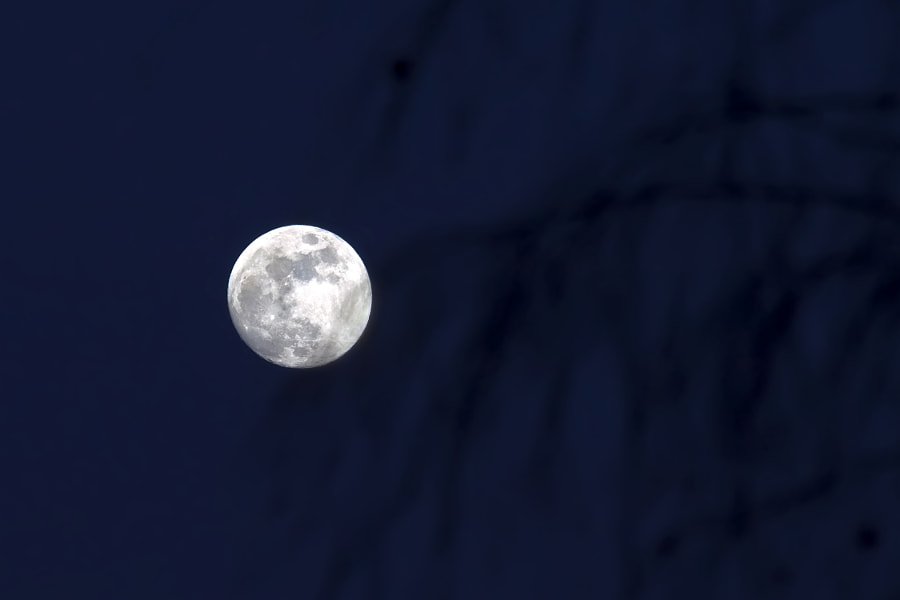full moon over birch branches