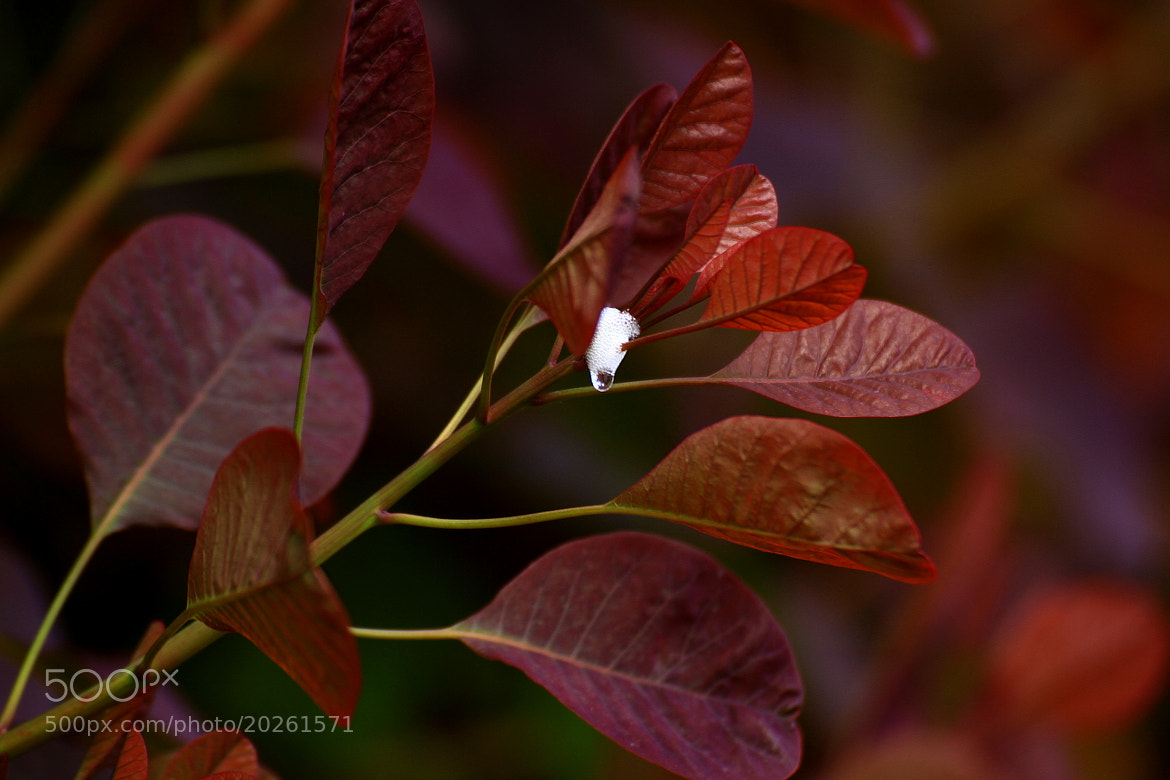 Photograph img 2506 A drop of nature by Martys Photos on 500px