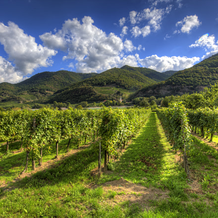 Wachau Valley Vineyards, Austria