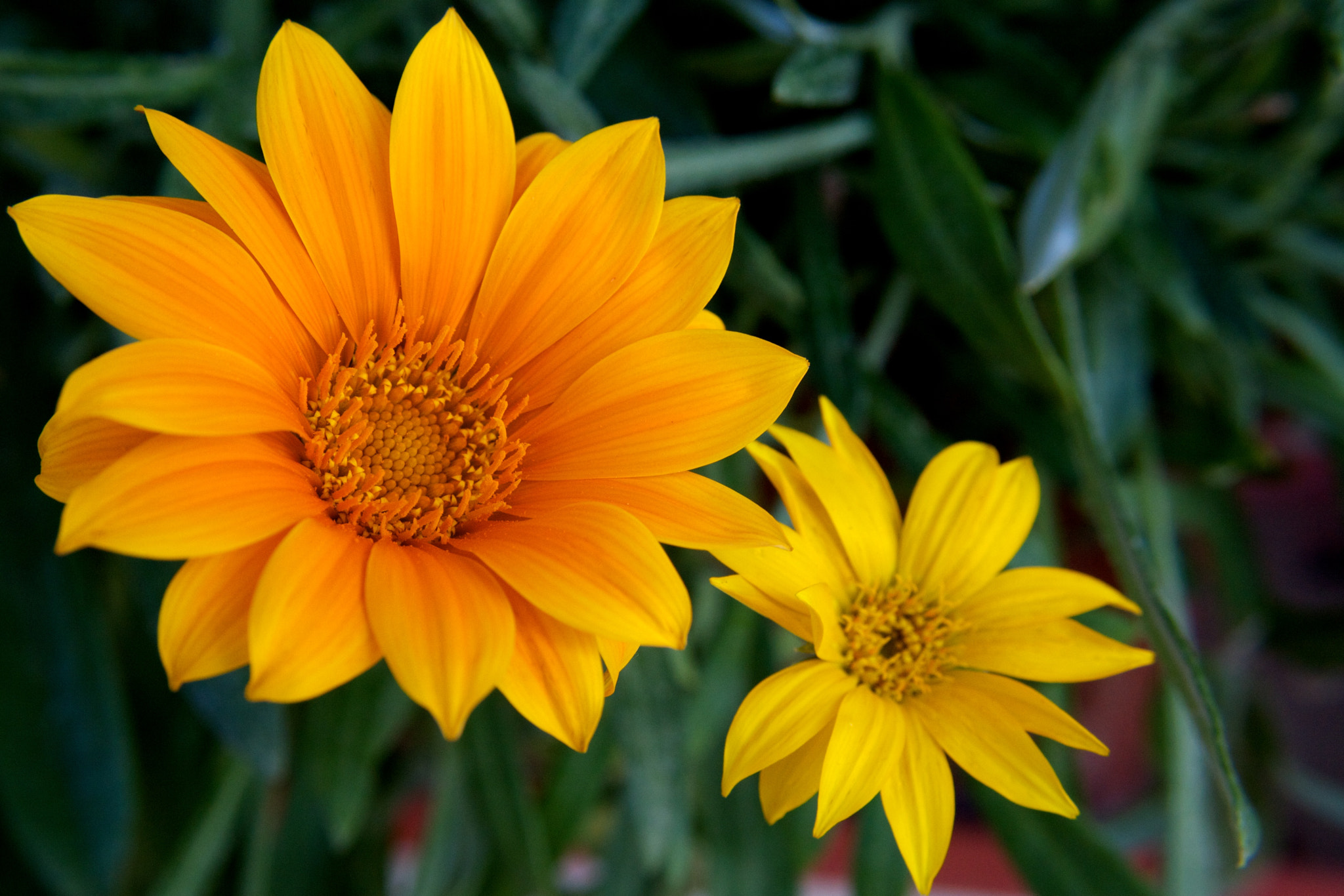 Photograph Yellow and orange by Darko Kontin on 500px