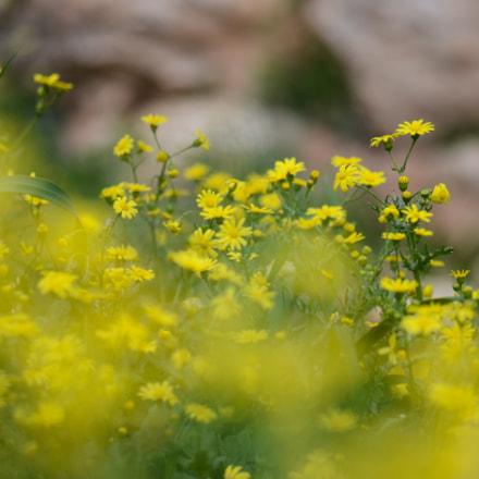 Yellow blust
