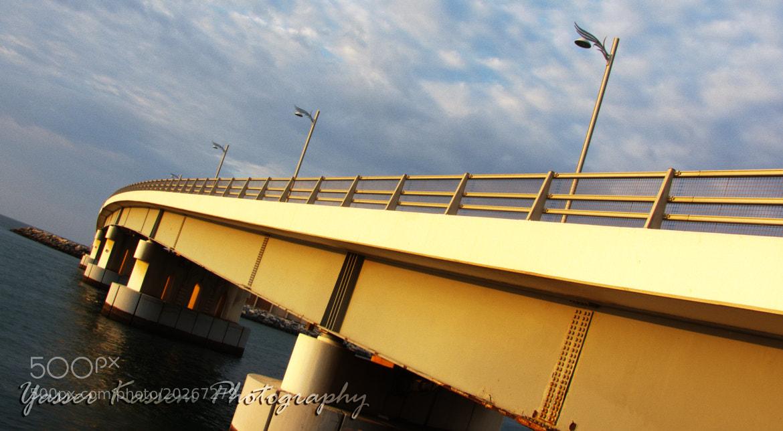 Photograph Palm Bridge by Yasser Kassem on 500px