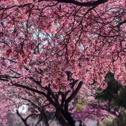 Spring is here, Canon EOS 7D MARK II