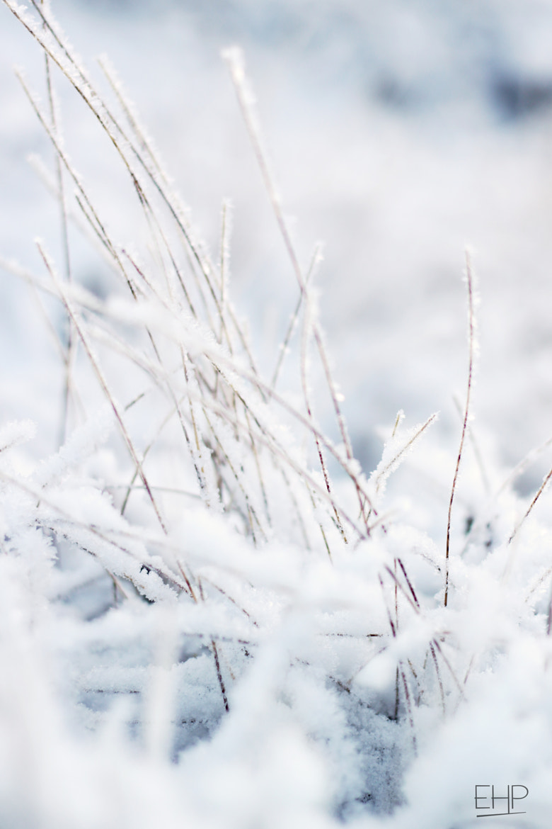 Photograph Frost by Eivind Hamran on 500px