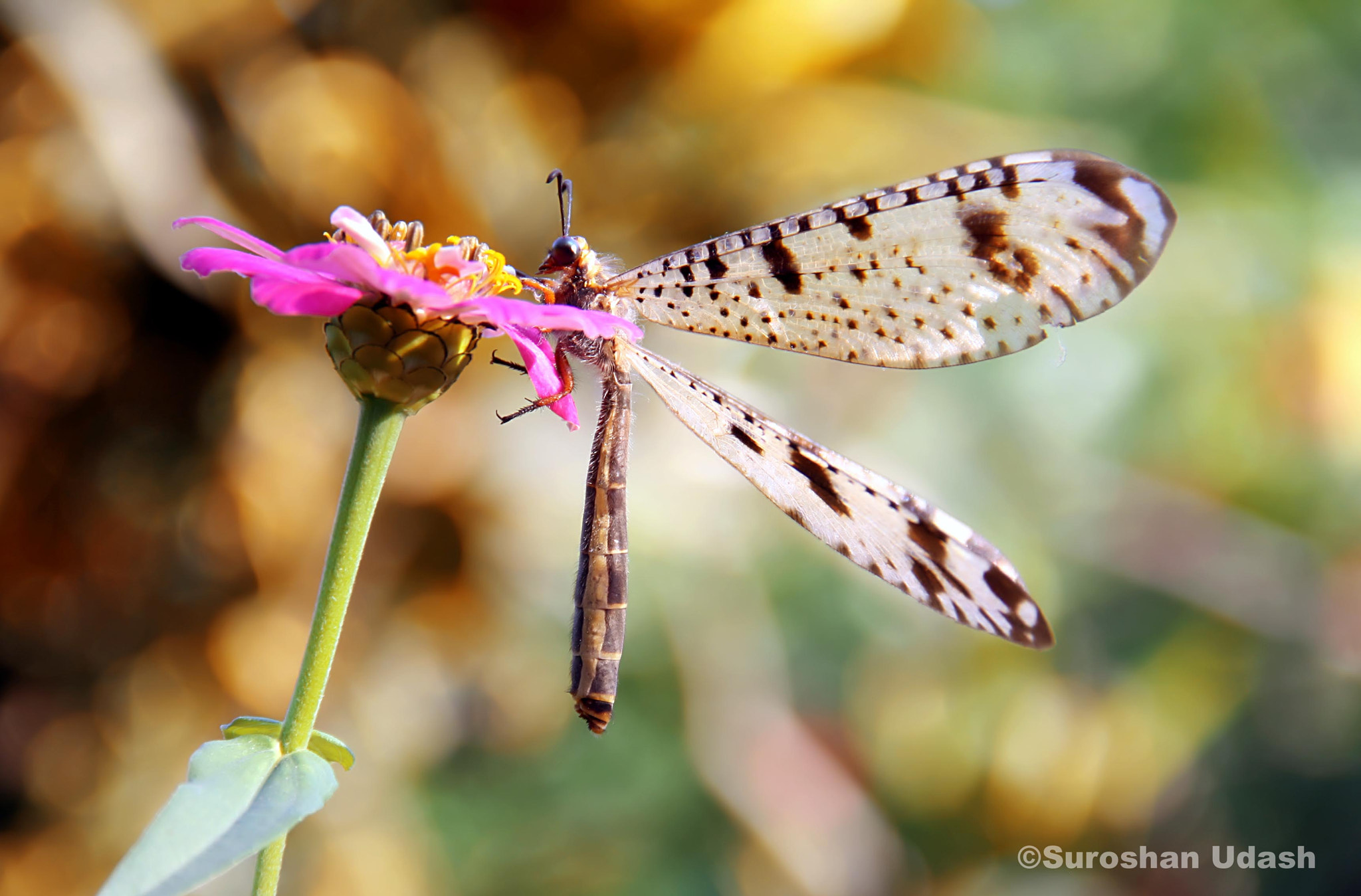 Photograph trying to fly  by Suroshan Udash on 500px
