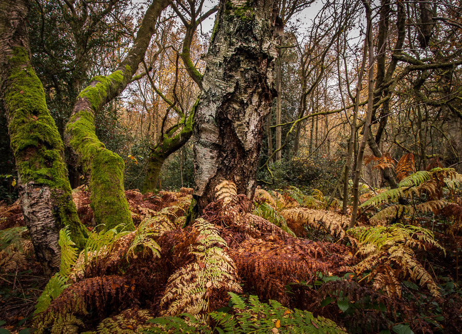 Photograph Mirkwood by Dave Gregory on 500px