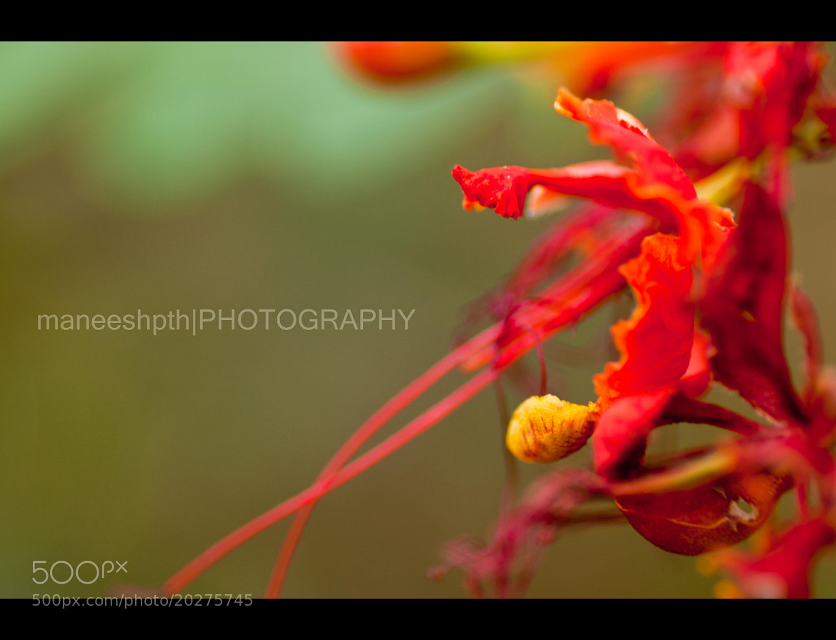 Photograph colours!!!!!!!! by maneesh p on 500px