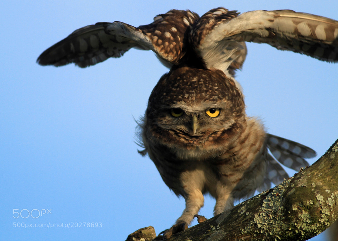 Photograph TAKE OFF  II by Itamar Campos on 500px