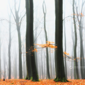 The Last Ones by Lars van de Goor (larsvandegoor)) on 500px.com