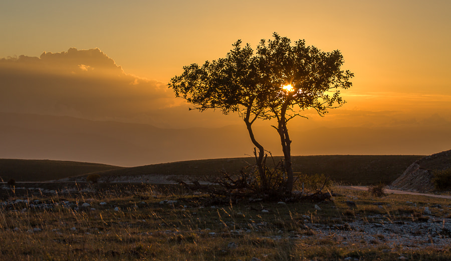 Photograph Lonely Trees by Hans Kruse on 500px