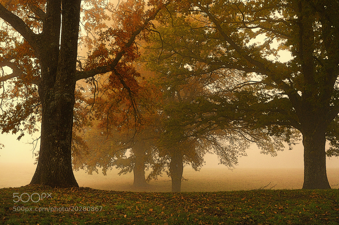 Photograph my autumn 2 by mauro maione on 500px