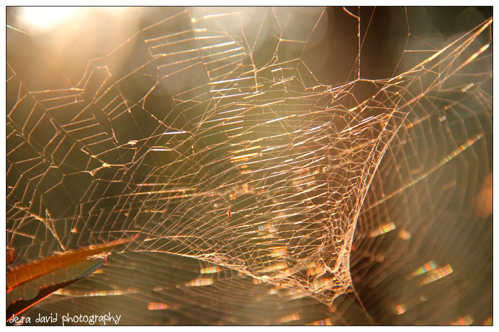 Photograph Spidee, ur web in my cam :) by dera david on 500px