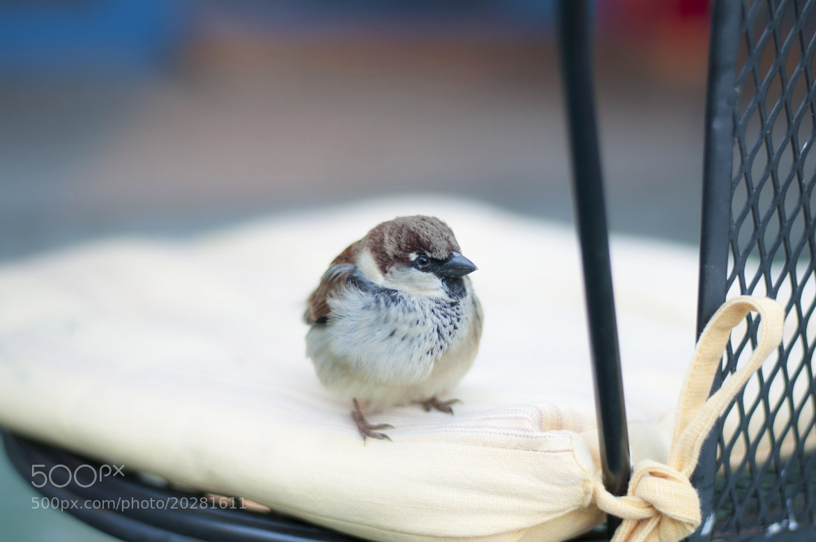 Photograph A little brave sparrow:) by Yulia R on 500px