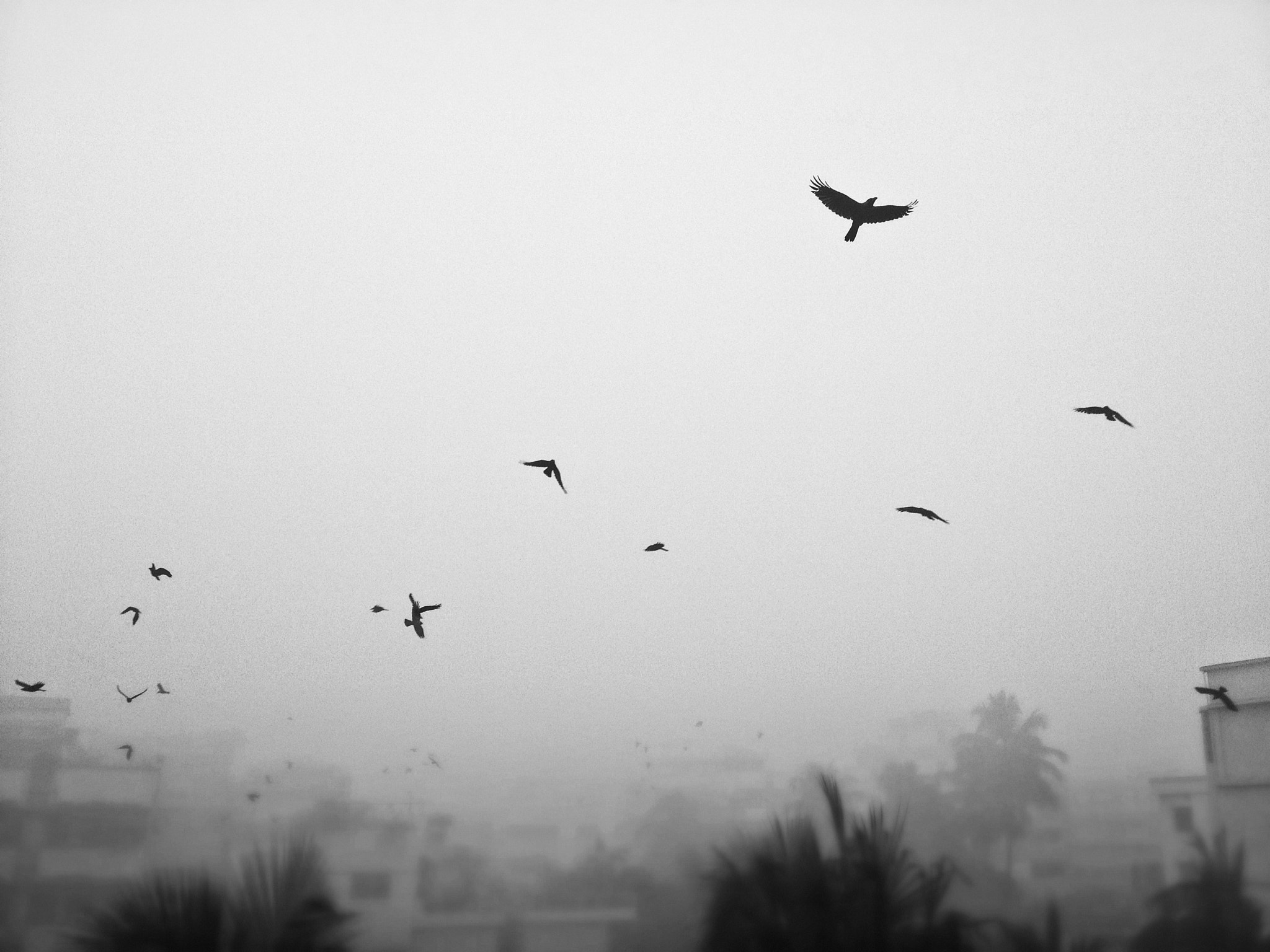 Photograph winter in my city ... foggy morning by amir  hamja on 500px