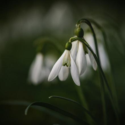 ++Frühling++
