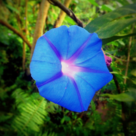 Blue Burst, Fujifilm FinePix S4500