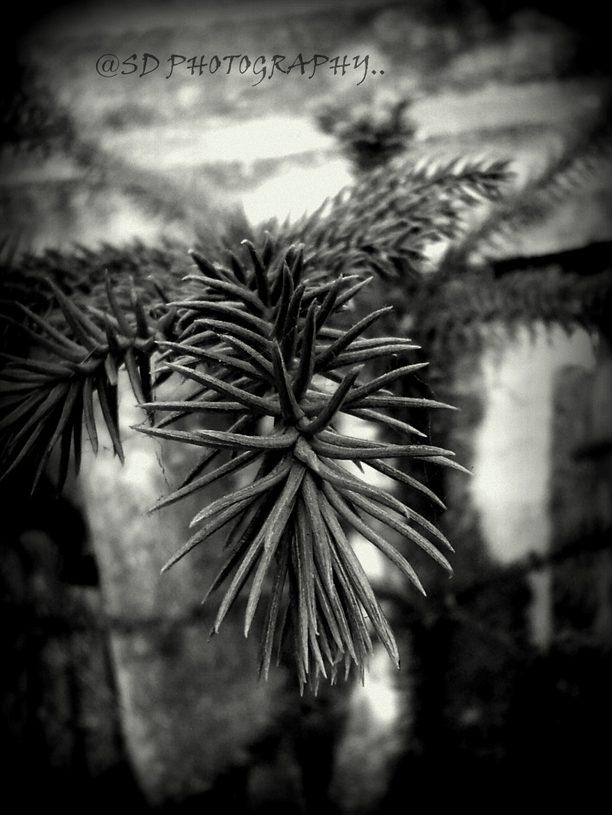 Photograph COME TO ME :) :) MACRO B/W  by SUBHA   on 500px