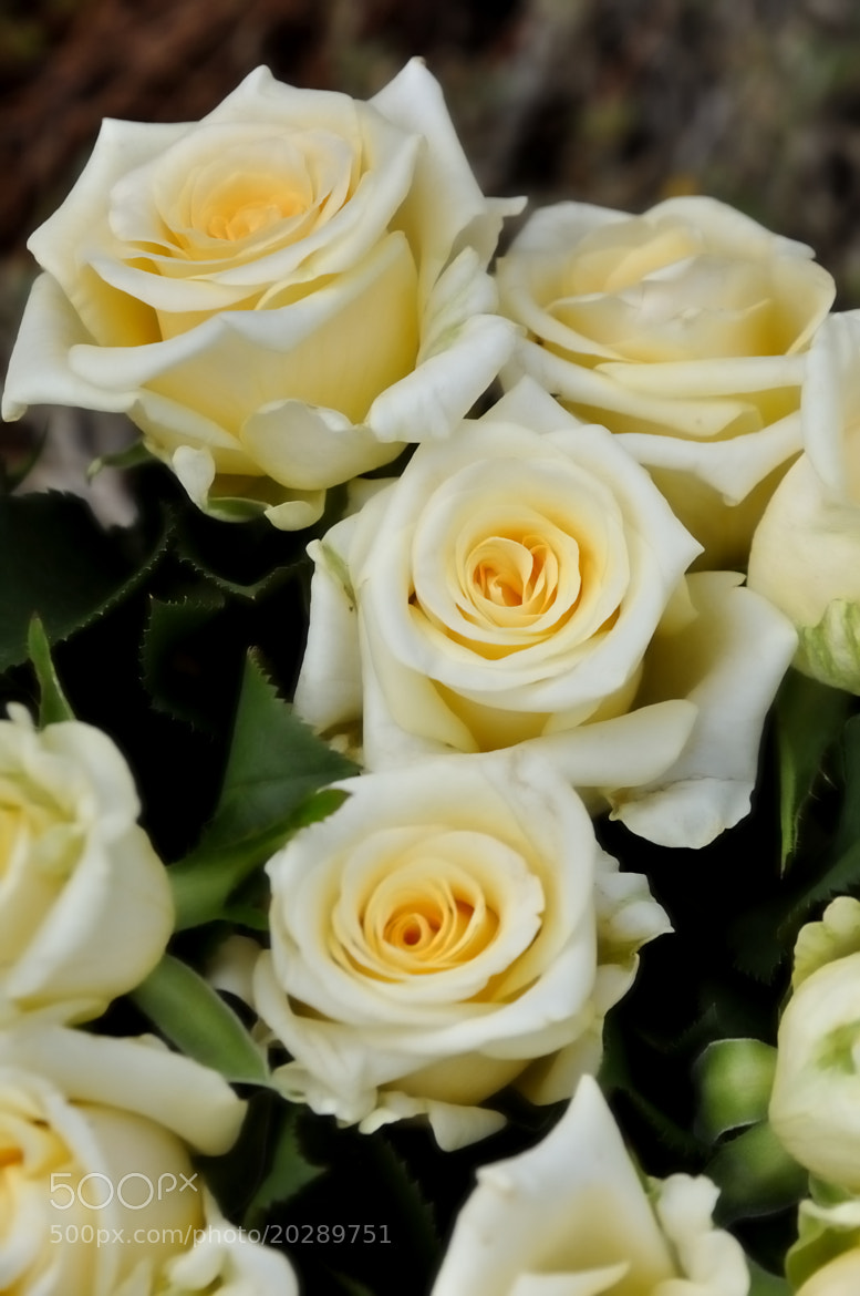 Photograph bouquet of white roses and yellow by Lourdes Bufi on 500px