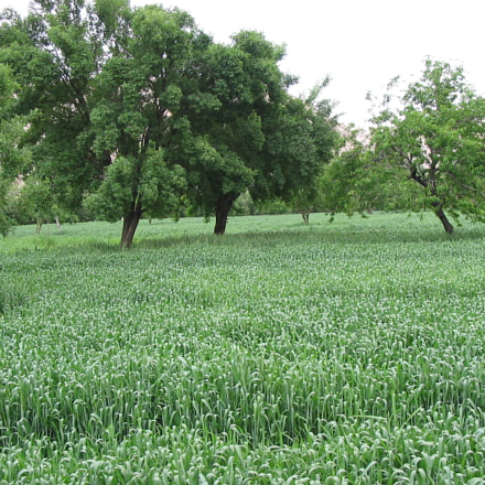 Green land in Daikundi, Canon POWERSHOT A60