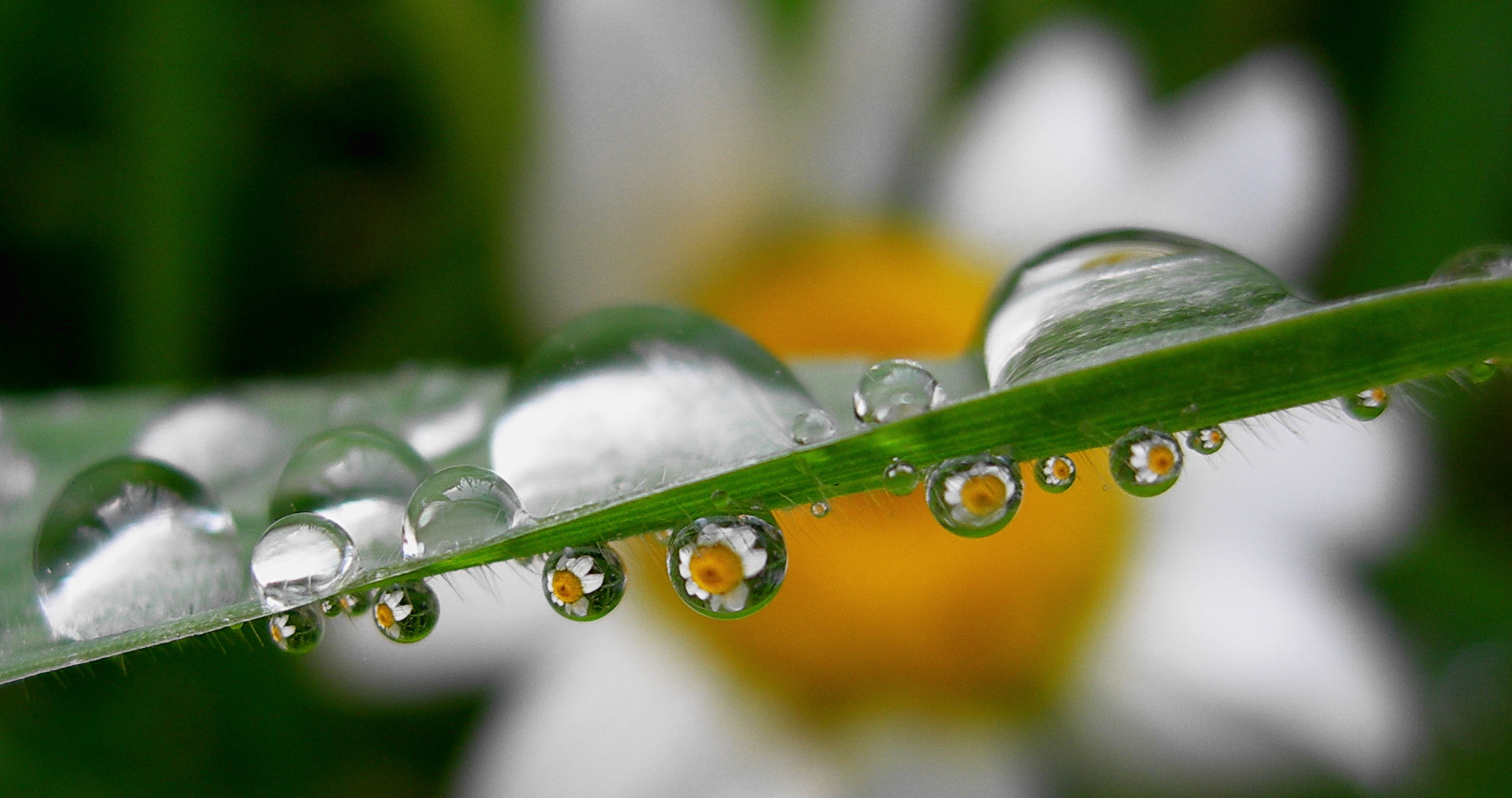 Photograph dew drops by tugba kiper on 500px
