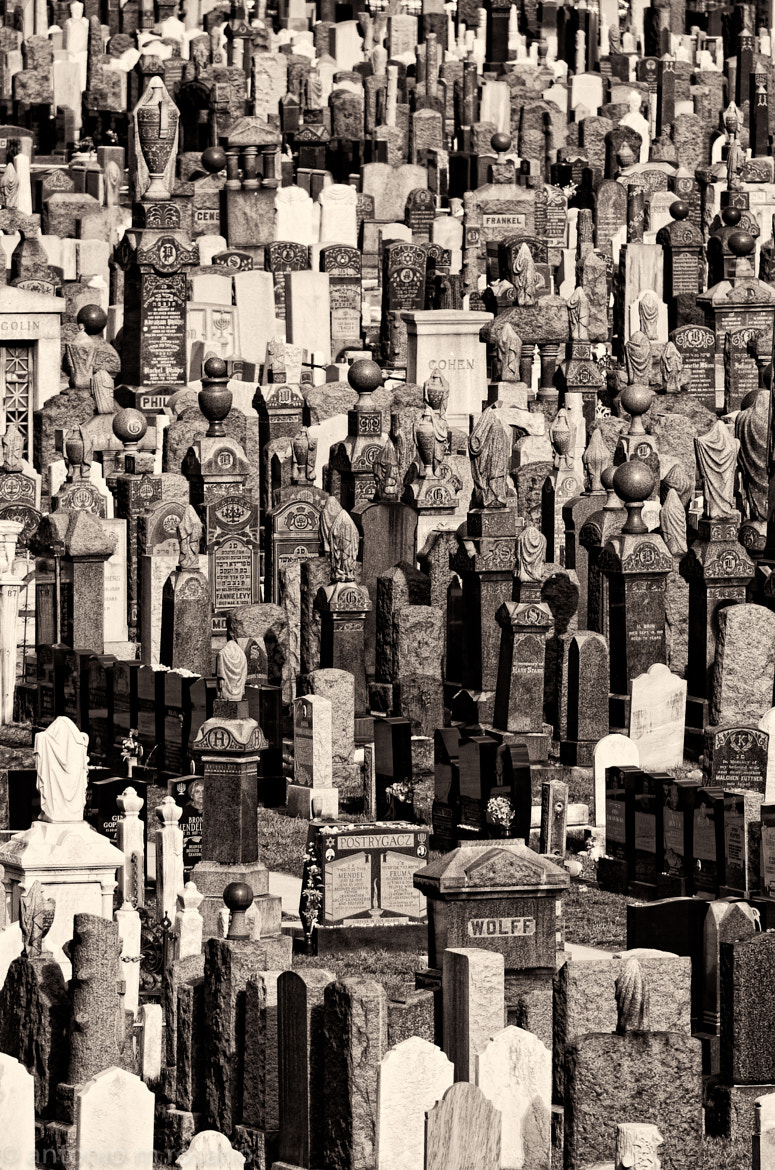 Photograph Jewish Cemetery in Brooklyn by Antonio M. Rosario on 500px