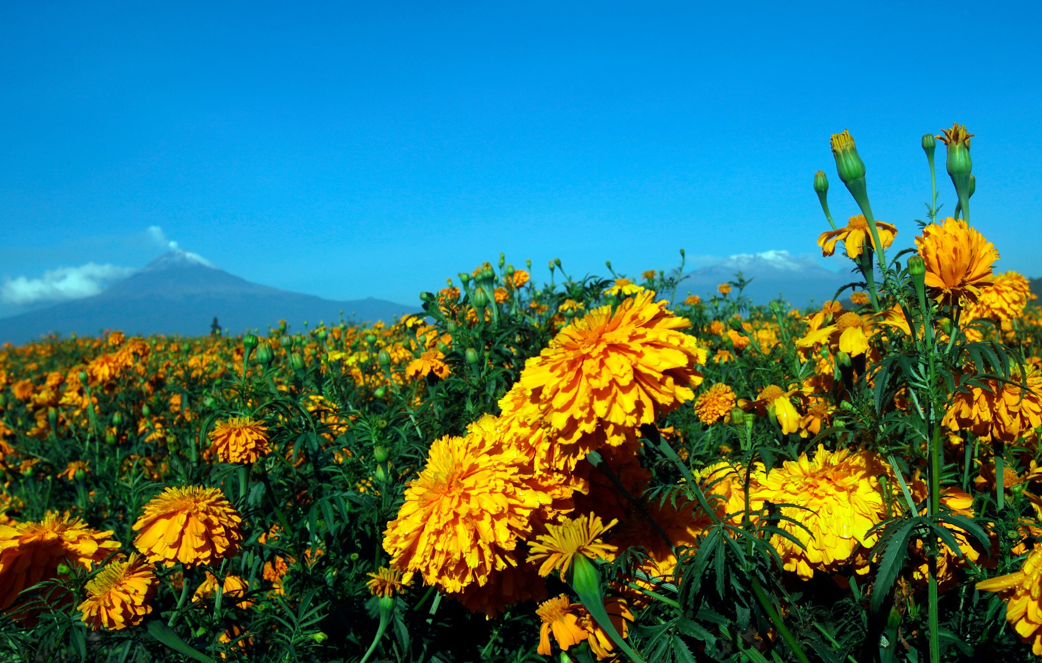 Photograph Flowers field and volcano by Cristobal Garciaferro Rubio on 500px