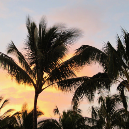 Palm Tree Sunset, Canon POWERSHOT ELPH 300 HS