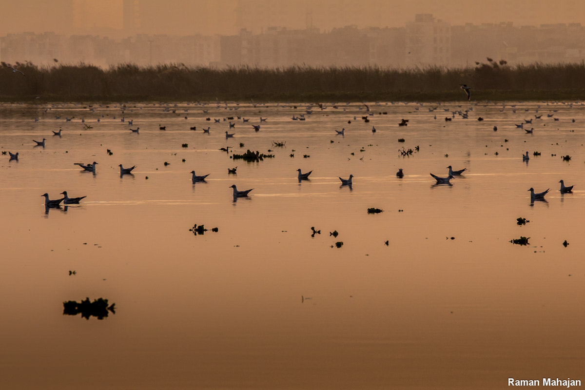 Photograph Scattered.. by Raman  Mahajan on 500px