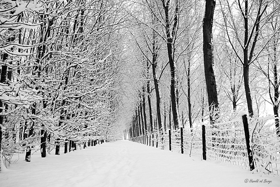 Photograph White world by Harold van den Berge on 500px