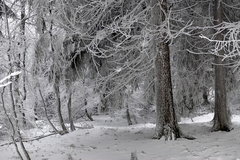 Photograph frosty by Komi Fuchs on 500px