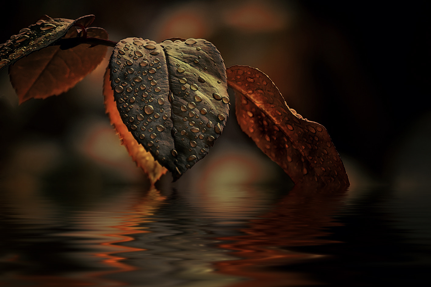 Photograph leaves by Detlef Knapp on 500px