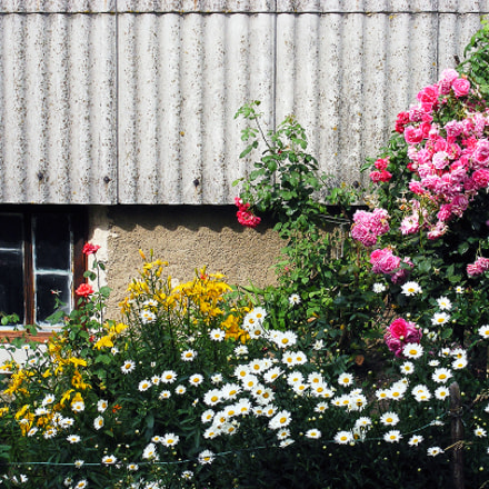 House in flowers, Fujifilm FinePix S5700 S700