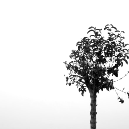 Little Solitary Tree, Fujifilm FinePix S9800 S9850 S9750
