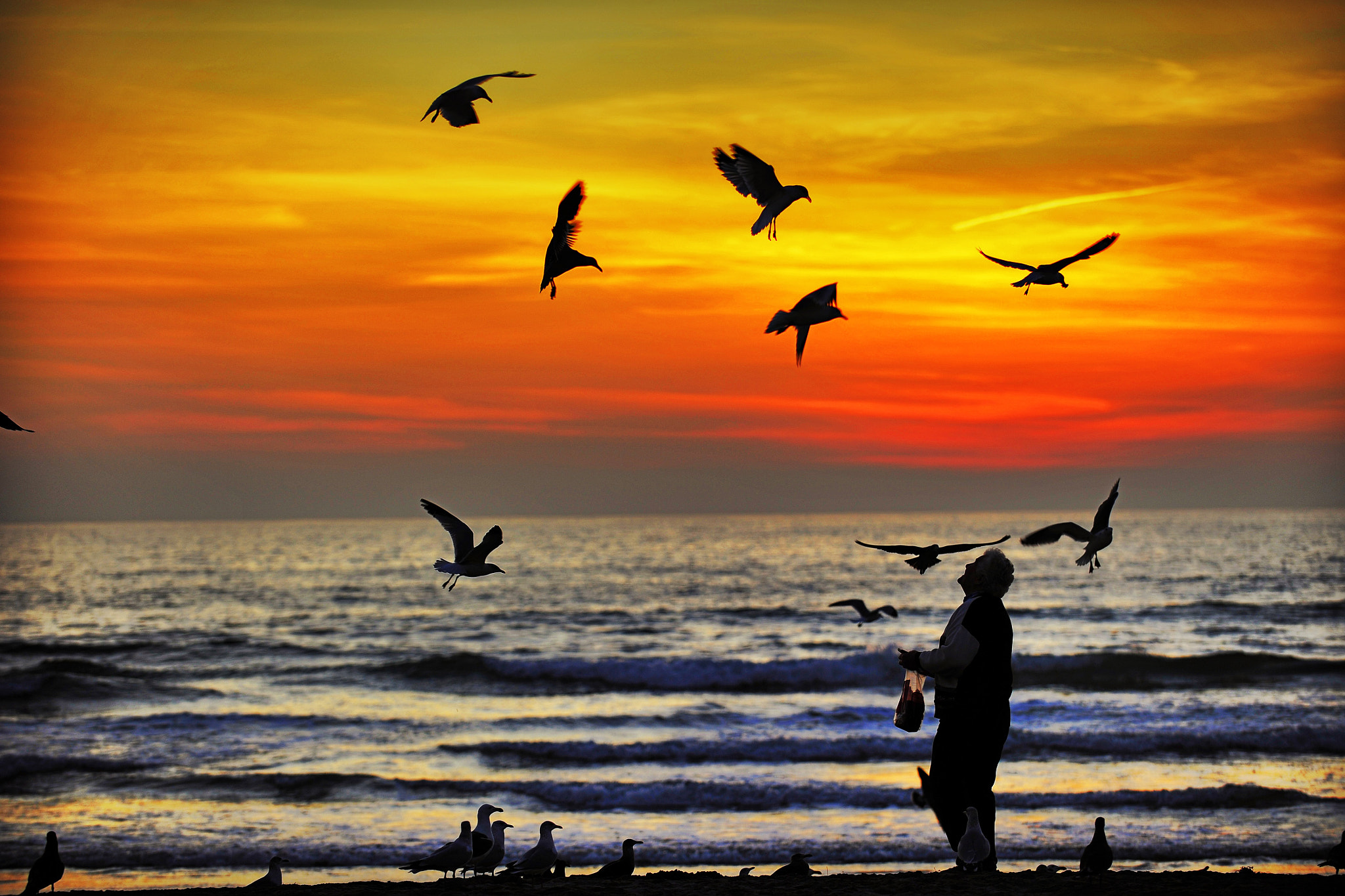 Photograph A Man Feeds the Seagulls at Sunset in Oceanside  by Rich Cruse on 500px