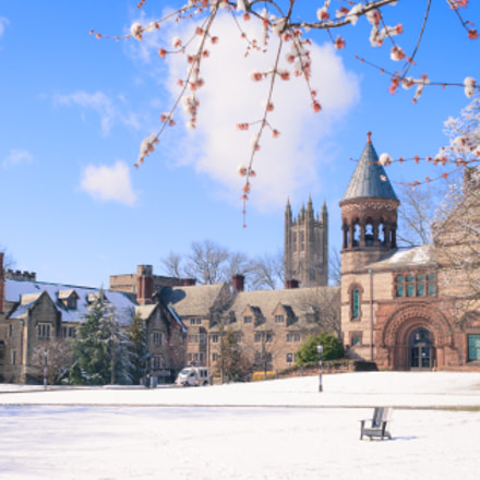 Winter at Princeton University, Canon EOS KISS DIGITAL X, Canon EF-S 24mm f/2.8 STM
