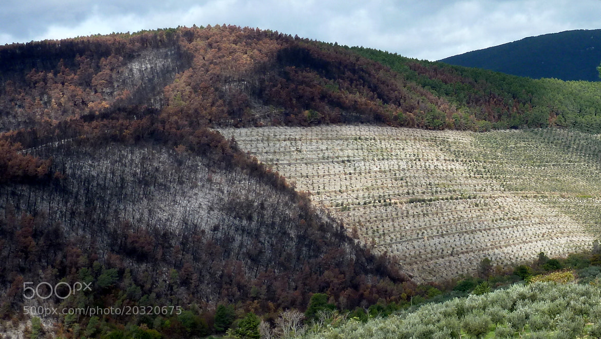 Photograph The damage of arsonists by Ulderico Pontini on 500px