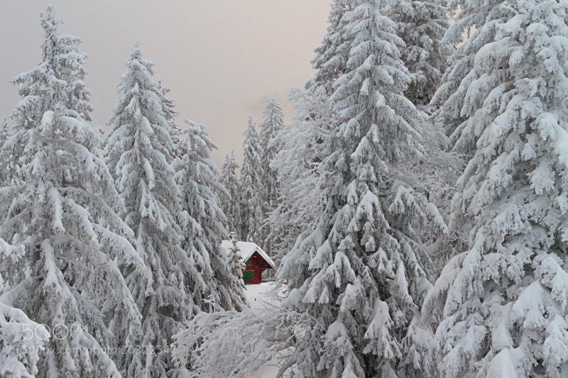 Photograph La cabane dans la forêt by Fabrizio Cantinotti on 500px
